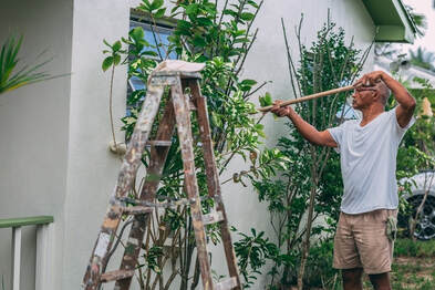 Picture of a man painting the outside of a house. The house is surrounded by tropical palm trees and he is using a long polled roller to paint the house grey. There is a ladder to his left that is battered with paint.